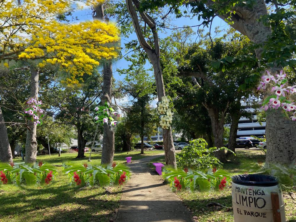 Idea para paseo de las orquídeas Parque Gándara