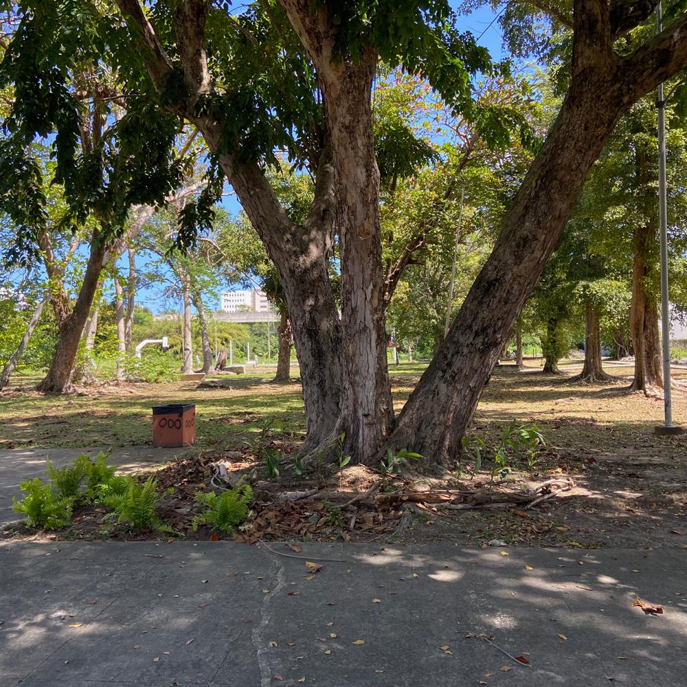 Esquina de helechos, Parque Gándara