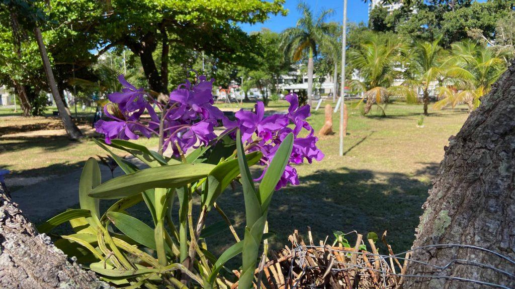 Flores en el parque gandaras